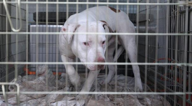 Those convicted of animal cruelty offences have gone on to commit thousands of crimes (PA)