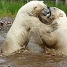 Two polar bears celebrate World Bromance Day with a hug (Jan Morse/PA)