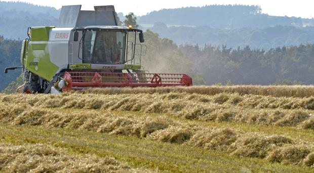 Farm incomes could be slashed by more than half if Britain leaves the EU without a free trade deal, an industry advisory body has warned