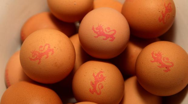 Everyone can now safely eat raw or lightly cooked eggs produced under the British Lion Code of Practice, according to the FSA (Dave Thompson/PA)