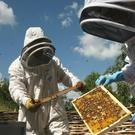 Beekeepers are concerned about the effects of pesticides and climate change (Katie Collins/PA)