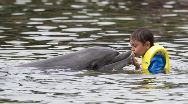 Joseph Mahmud, 10, from Portsmouth, swims with a dolphin during the Dreamflight visit to Discovery Cove in Orlando, Florida (Steve Parsons/PA)