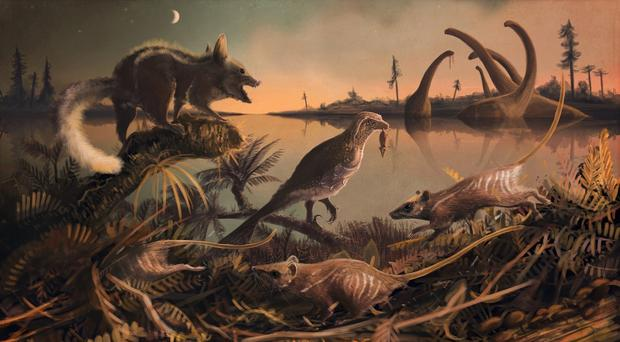 Early Cretaceous fossils