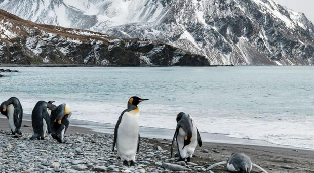 The move would preserve wildlife including penguins (Lewis Pugh Foundation)
