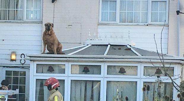 A dog needed to be rescued from a roof by firefighters in Shropshire