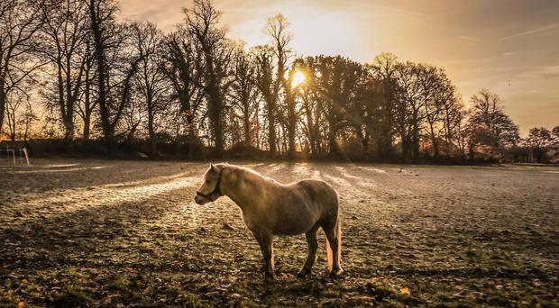 Horse in frost in Yorkshire this week (Danny Lawson/PA Wire/PA Images)