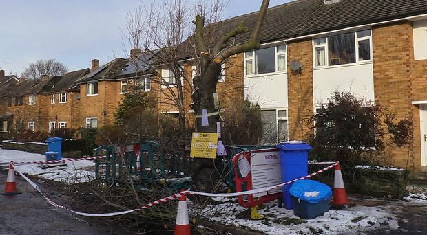 A tree which has been cut down in Abbeydale Park Rise, in Dore, Sheffield, as part of the local council's controversial felling programme. (Dave Higgens/PA)