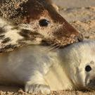 A grey seal and her pup on the beach at Horsey Gap (Joe Giddens/PA)