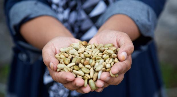 Coffee farmers in Sumatra, Indonesia are having to cope with changing climate (James Robinson/Fairtrade Foundation)