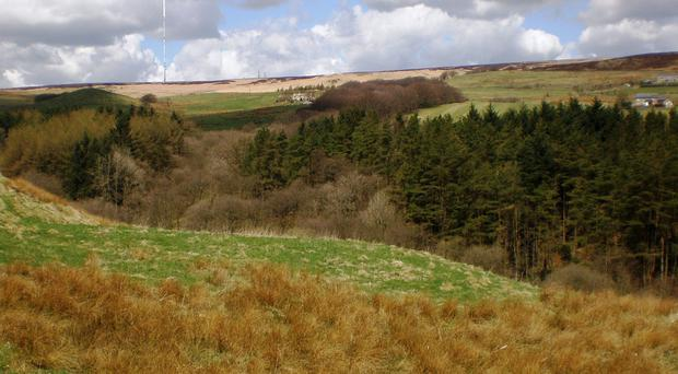 Planting will begin in March at the Woodland Trust's Northern Forest flagship site at Smithills, Bolton (Woodland Trust/PA)