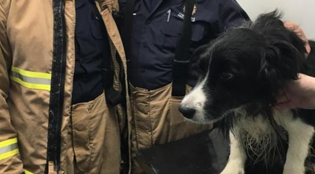 Toby the collie was rescued by firefighters and taken to the vets (Tyne and Wear Fire and Rescue Service/PA)