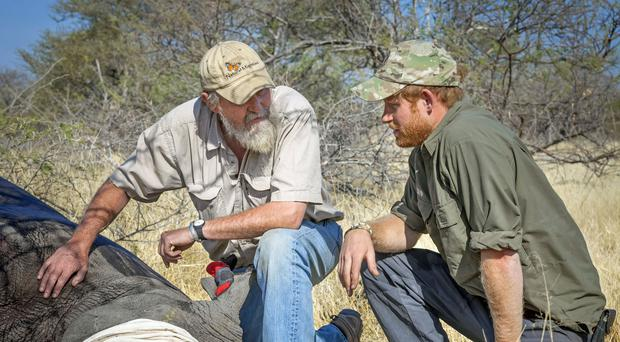 Prince Harry carrying out rhino protection work on a previous visit to Botswana (Rhino Conservation Botswana)