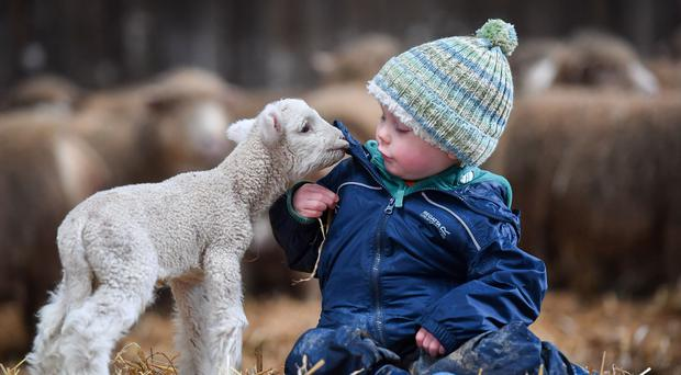 Leo Bartholomew, three, from Bath, cuddles up with a newborn lamb at The Olde House, Chapel Amble, Cornwall (Ben Birchall/PA)