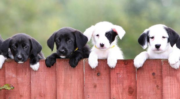 Puppies at a Dogs Trust facility (Martin Rickett/PA)