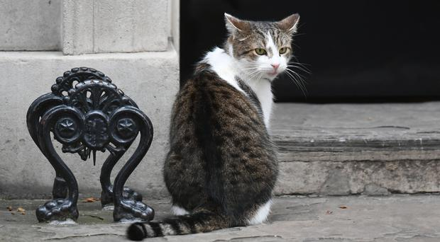 Larry the cat in Downing Street, London (Victoria Jones/PA)