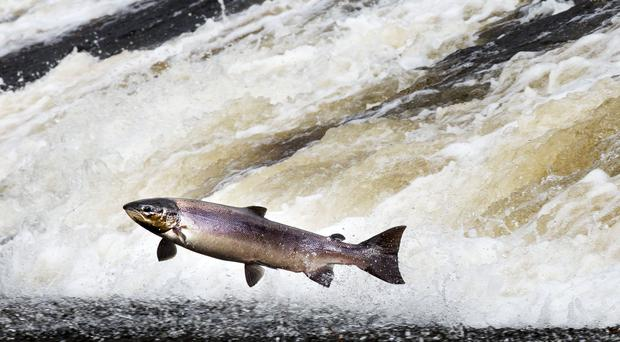 Salmon and whisky export boom (David Cheskin/PA)