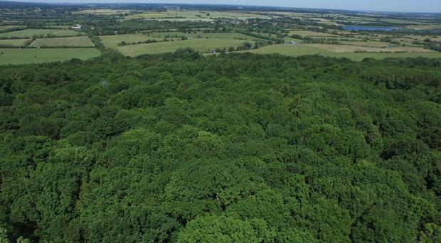 Scientists analysed trees in Wytham Woods, near Oxford, with laser scanning technology (M Disney, UCL Geography and NERC NCEO, and K Calders, National Physical Laboratory NPL/PA)
