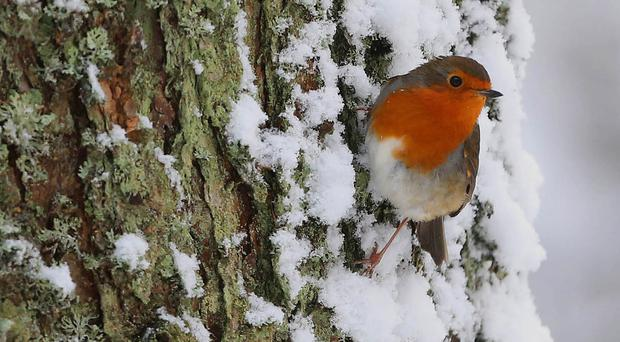 Experts are urging people to look out for wildlife and pets in the snowy weather (Niall Carson/PA)