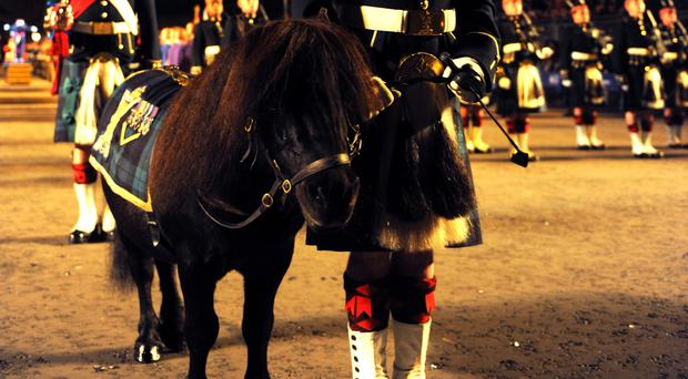 Shetland Pony Cruachan III at the Royal Edinburgh Military Tattoo (Mark Owens/Army HQ Scotland/PA)