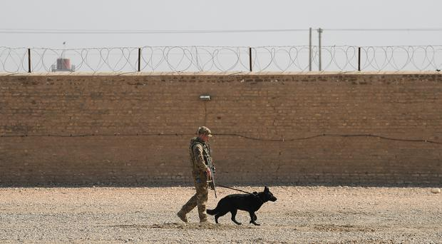 New figures released by the Ministry of Defence show 38 military working dogs were euthanised between March and December (Joe Giddens/PA)