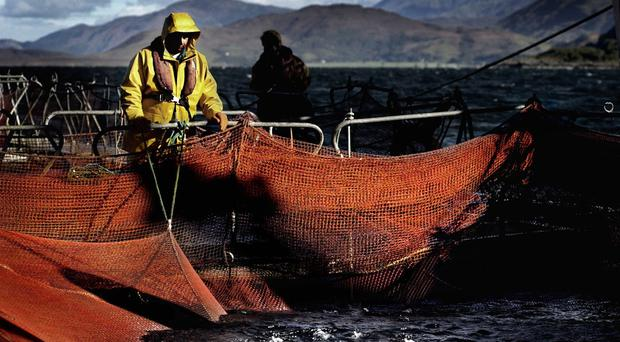 Production in the aquaculture industry is expected to increase from 163,000 tonnes in 2016 to 300,000 – 400,000 tonnes by 2030 (David Cheskin/PA)