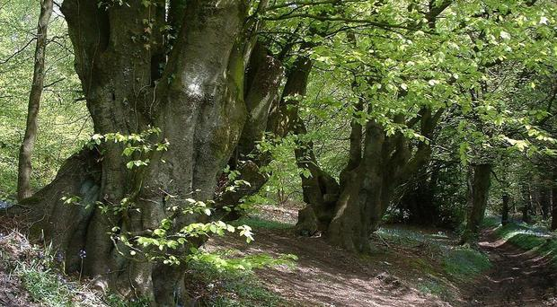Campaigners have welcomed more robust planning protection for ancient woodland (Rory Francis/PA)