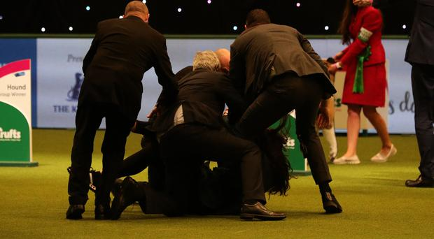 Owner Yvette Short clutched the overall winner - a whippet bitch called Tease - as security staff grappled with the intruder