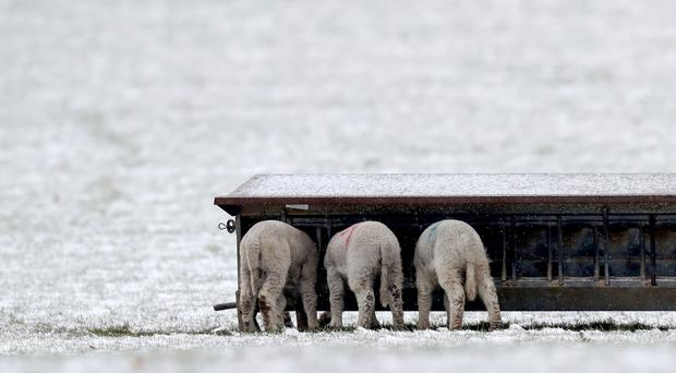 Lambs will have been affected by the latest cold snap, farmers say (Gareth Fuller/PA)