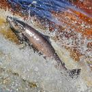 New regulations will determine where anglers will have to return fish to the water (Owen Humphreys/PA)