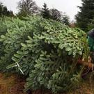 Holyrood has passed legislation devolving the management of forestries (David Cheskin/PA)