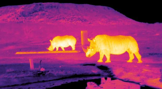 Thermal image of rhinos in South Africa (Endangered Wildlife Trust/LJMU/PA)