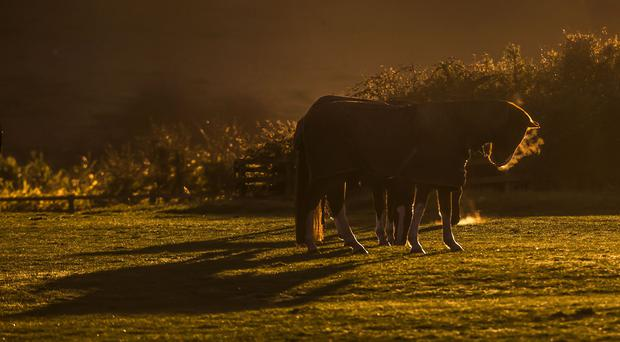 A number of horses escaped onto the carriageway of the M11 (File picture, Danny Lawson/PA)