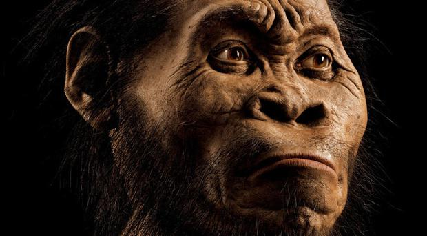 Artists's reconstruction of Homo naledi (Mark Thiessen/National Geographic/PA)