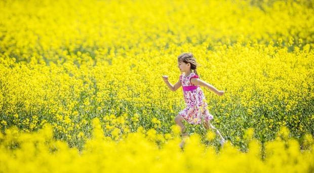 Maja-Isobel Lawson plays in a field of yellow flowers near Bretton in Yorkshire (Danny/LawsonPA)