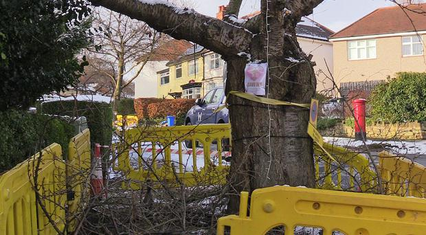 A tree which has been cut down in Abbeydale Park Rise, in Dore, Sheffield (Dave Higgens/PA)