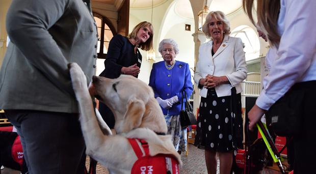 Clare Guest (2nd left) founder of Medical Detection Dogs speaks to the Queen and the Duchess of Cornwall during the 10th anniversary celebration of the charity at the Royal Mews in London (Ben Stansall/PA)