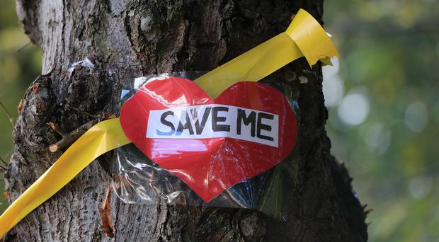 A yellow ribbon and 'save me' message placed by campaigners on a tree on Rivelin Valley Road in Sheffield (Peter Byrne/PA)