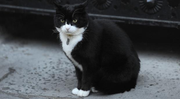 Chief mouser' Palmerston (Nick Ansell/PA)