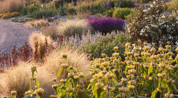 The RHS says the Dry Garden at its Hyde Hall garden, which needs little watering, is thriving in the hot weather (RHS/Lee Beel/PA)