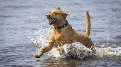 Ways to keep your pets safe during the warm summer days.