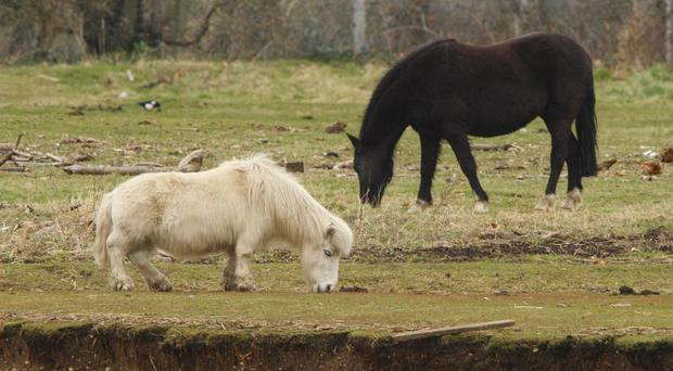 Ponies graze near to salt marshes by the River Test, Southampton (Chris Ison/PA)