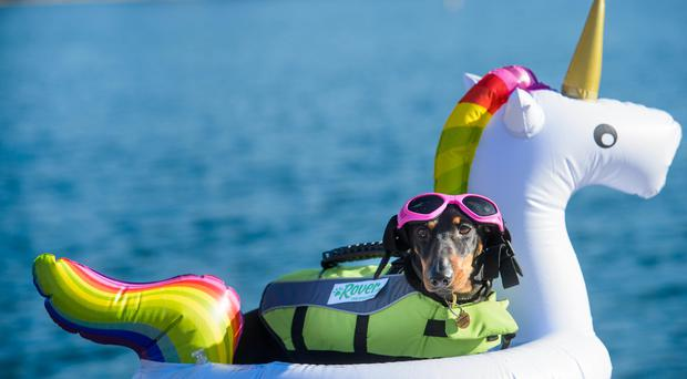 Bob, the Dachshund, at the West Reservoir, London (Anthony Upton/PA)