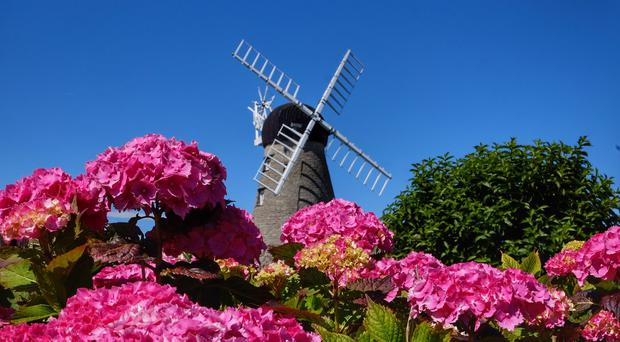Flowers at Whitburn windmill in Sunderland provided a striking contrast against the blue skies (Owen Humphreys/PA)