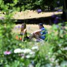 People enjoy the sunshine in Hyde Park in London, as the hot weather continues across the country.