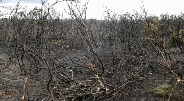 Hot, dry conditions make grassfires a major problem (Andrew Matthews/PA)