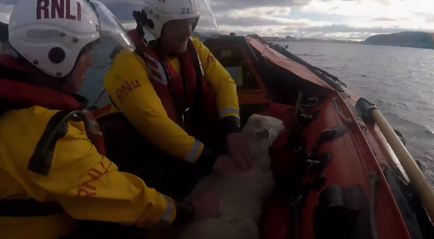The RNLI crew transport the stranded sheep to safety (Screengrab/RNLI/PA)