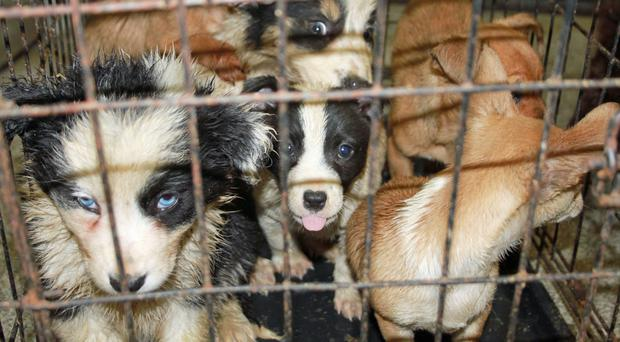 Ban On Pet Shop Kitten And Puppy Sales Backed By Government