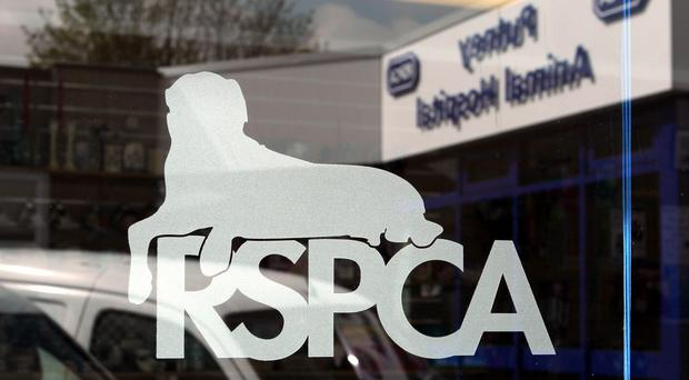 The regulator found a group of the RSPCA's trustees failed to ensure they were properly informed before making a settlement offer (PA)