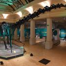 Dippy has been a hit at Birmingham Museum and Art Gallery (Trustees of the Natural History Museum/PA)
