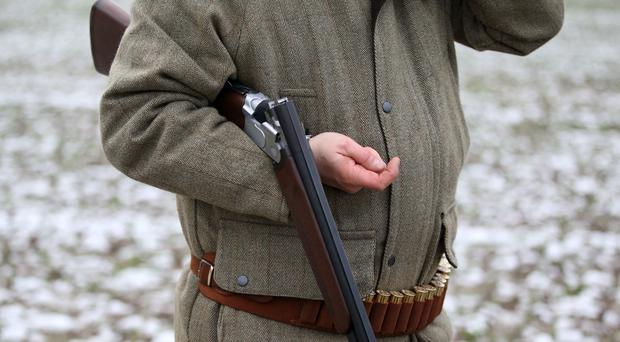 A man in the fields during a traditional pheasant shooting (PA)